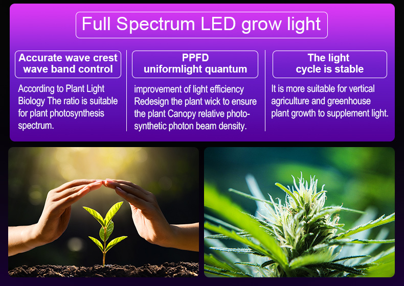 full spectrum led grow light For Green factory commerical FL-ZWD-LYH1
